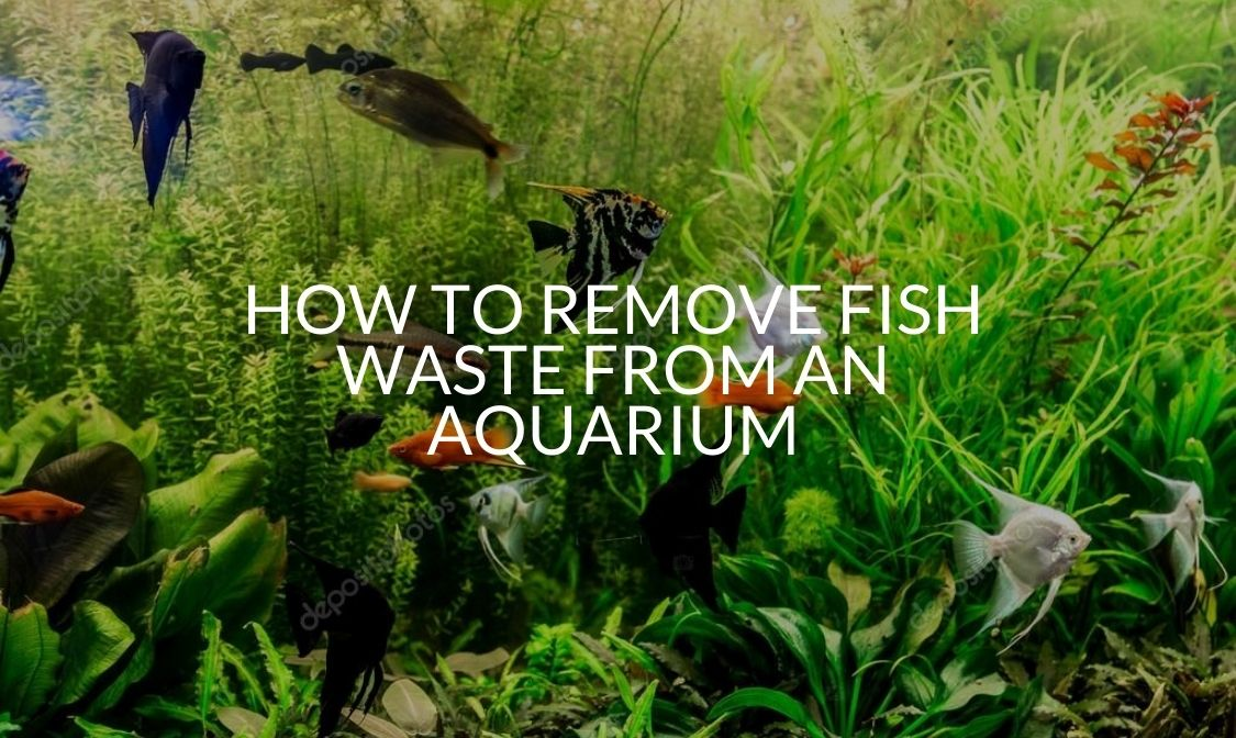 How To Remove Fish Waste From An Aquarium