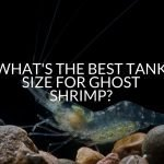 What's The Best Tank Size For Ghost Shrimp?