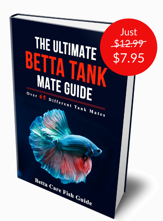 30 Betta Tank Mates List Of Fish That Can Live With Bettas Betta Care Fish Guide